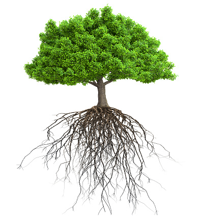 a tree with roots isolated 3D illustration 1124466490