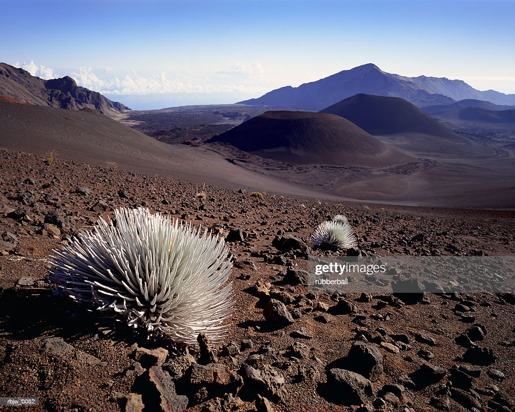 a vast desert wasteland with endless hills and a bush in the foreground : Stockfoto