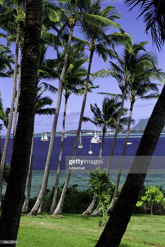 a vertical photograph of hawaiian palm trees near the ocean with boats in the background : Stockfoto