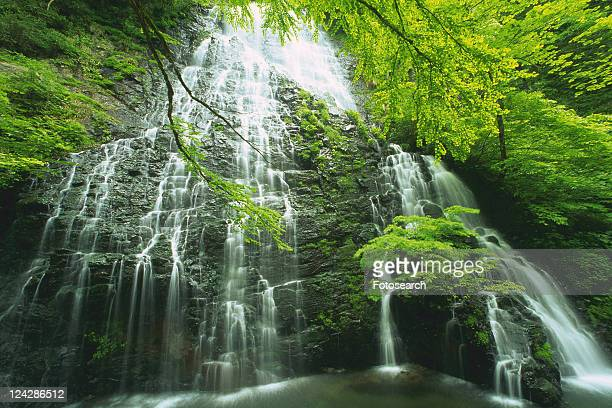 a waterfall, surrounded by several trees, low angle view, long exposure, fukui prefecture, japan - 福井県 ストックフォトと画像