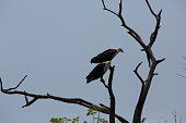 an african bird is looking for