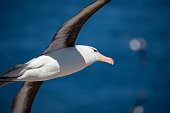 sea gull is living antarctica is