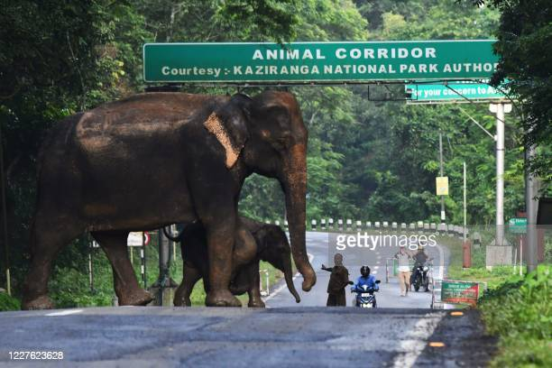 A wild elephant and a calf cross a National Highway at the flood affected Kaziranga National Park in India's northeast state of Assam on July 16,...
