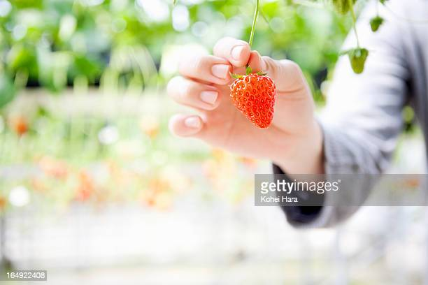 a woman harvesting a strawberry