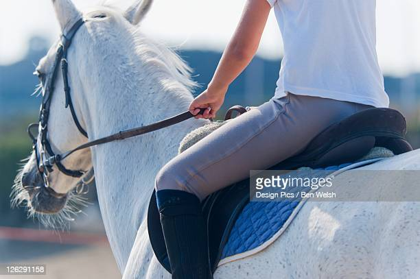 a woman riding a white horse - big bums stock photos and pictures