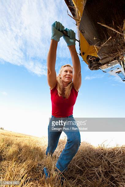 a woman works with equipment for harvesting wheat