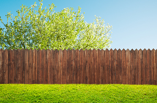 a wooden garden fence at backyard and bloom tree in spring 1128869522