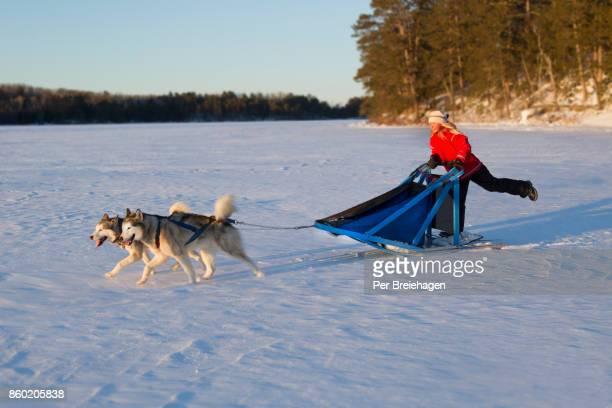 a young girl dog sledding in Minnesota