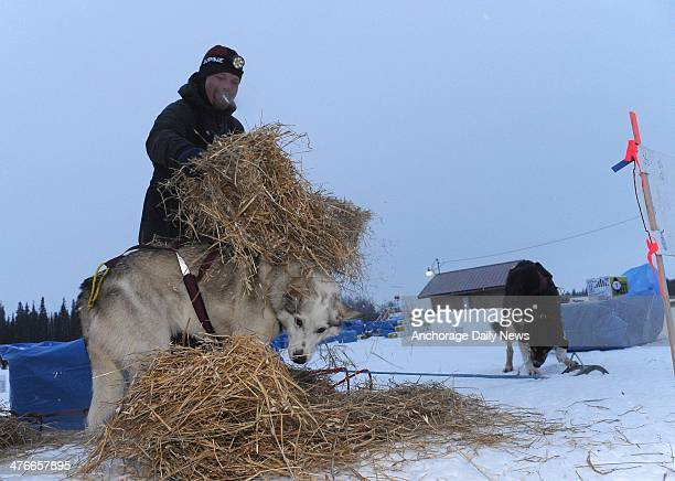 Aaron Burmeister puts straw down for his dogs at the Nikolai checkpoint during the 2014 Iditarod Trail Sled Dog Race on Tuesday March 4 2014...