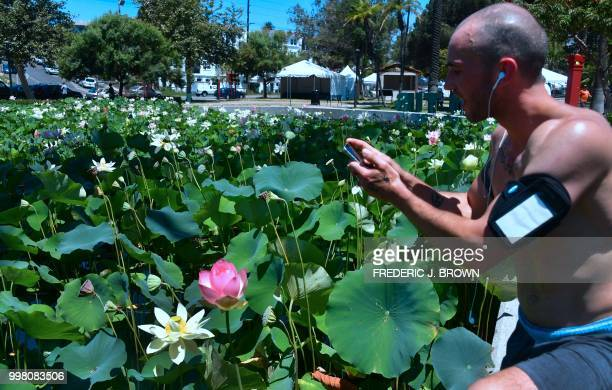 Aaron Simmonds takes a break from his morning workout to snap photos of Lotus flowers blooming at Echo Park Lake in Los Angeles California on July 13...