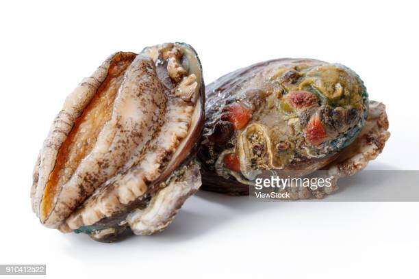 Abalone with seafood