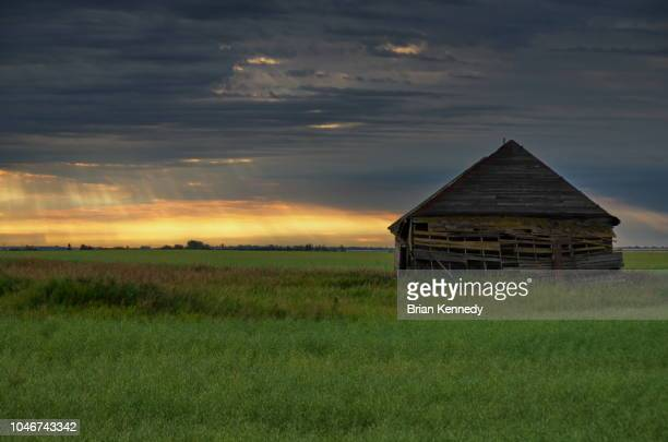 abandoned barn in a field at sunrise - canadian prairies stock photos and pictures