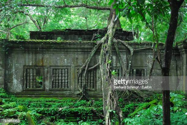 abandoned built structure against trees - gerhard schimpf stock pictures, royalty-free photos & images