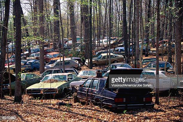 abandoned cars in the woods - junkyard stock photos and pictures