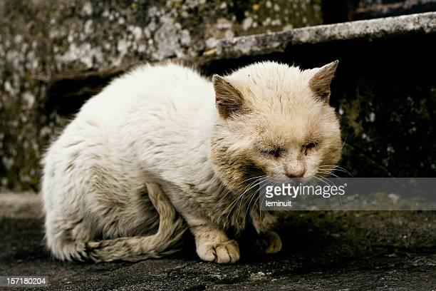 abandonado cat - maltrato animal fotografías e imágenes de stock