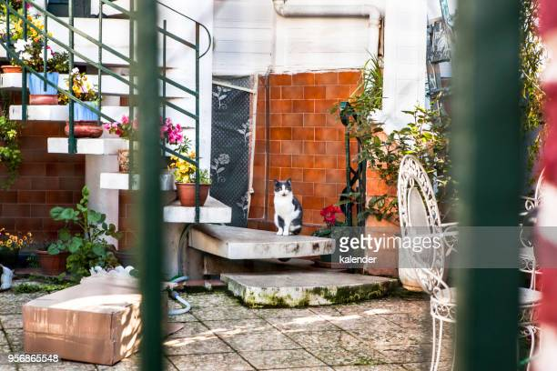 Verlassene Vorgarten mit Katze in Buyukada in Istanbul