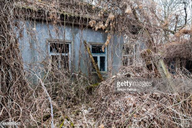 abandoned house covered with wild grapes. chernbyl zone, ukraine - cinza nuclear - fotografias e filmes do acervo