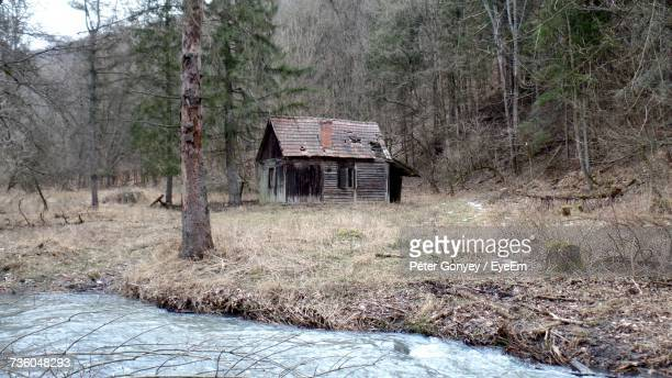 Abandoned House In Forest