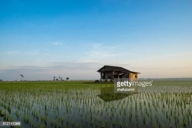 abandoned house in paddy field - shaifulzamri stock-fotos und bilder