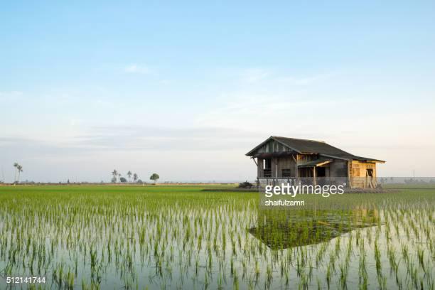 abandoned house in paddy field - shaifulzamri - fotografias e filmes do acervo