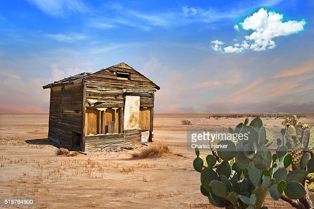 Abandoned Shack in Desert with Prickly Pear Cactus in Foreground