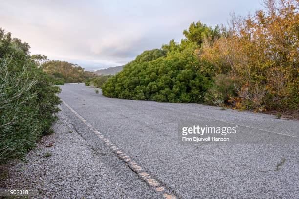abandoned with cracks road in tarifa spain - nature taking over - finn bjurvoll stock pictures, royalty-free photos & images