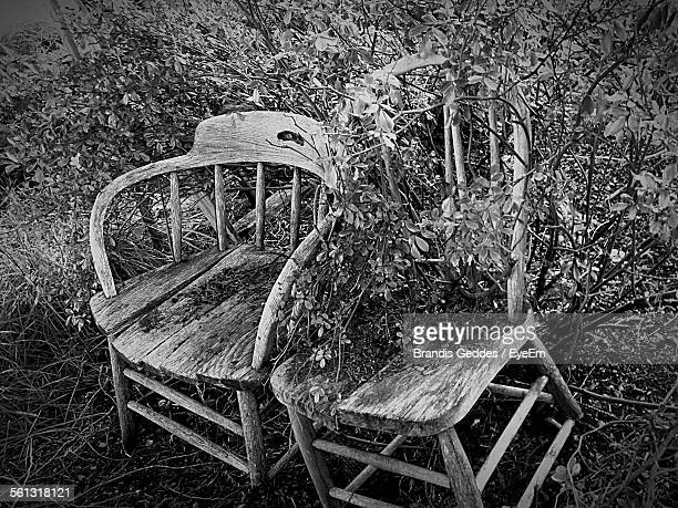 Abandoned Wooden Chairs With Overgrown Plant In Back Yard