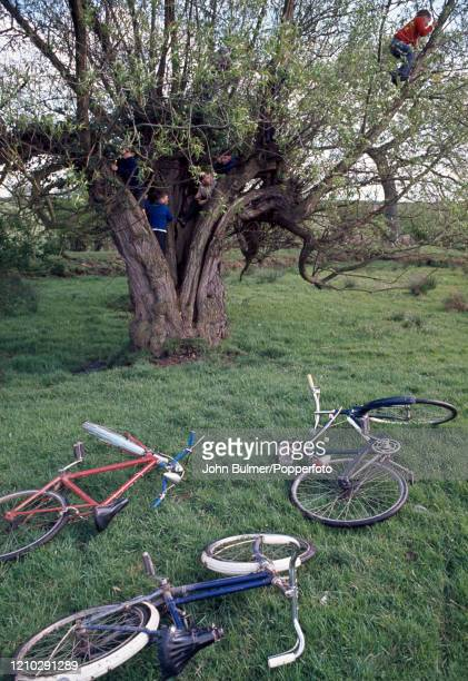 Abandoning their bicycles, young boys play on the trunk and branches of a tree in the village Pembridge, England, circa June 1966. During the summer...