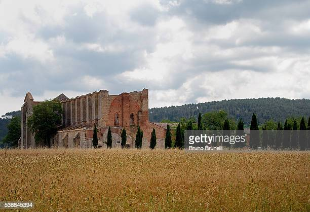 abbazia di san galgano - san bruno stock pictures, royalty-free photos & images