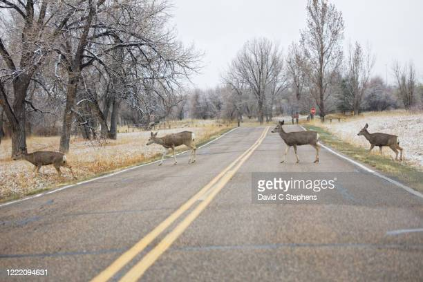 abbey road style - four deer cross road - abbey road stock pictures, royalty-free photos & images