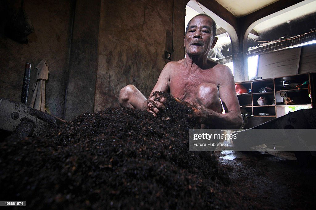 Abdul Muis 70 Cuts Tobacco In Traditional Curing Factory On April 6