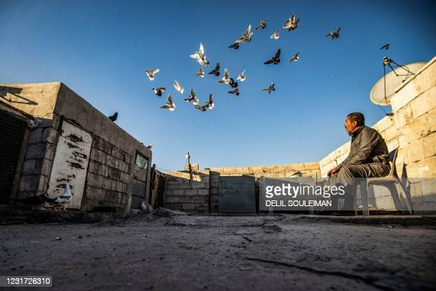 Abdulhamid Hana, a 50-year-old Syrian pigeon keeper, watches his birds on the roof of his home in Syria's east central city of Raqa on March 13,...
