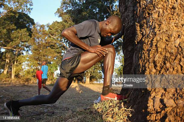 Abel Kirui of Kenya and double world champion in the marathon stretches against a tree before a training run in Angily on February 4 2012 in Nairobi...