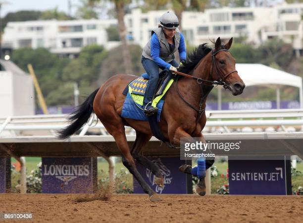 Abel Tasman gallops in preparation for the Breeders' Cup at Del Mar Race Track on November 1 2017 in Del Mar CA