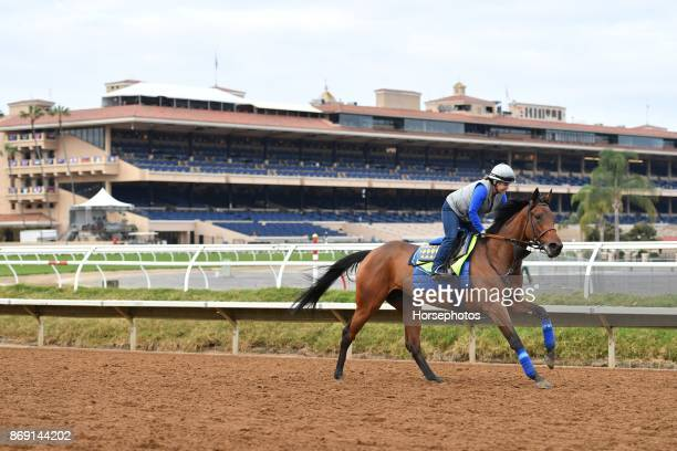 Abel Tasman on track in preparation for the Breeders' Cup at Del Mar Race Track on November 1 2017 in Del Mar California