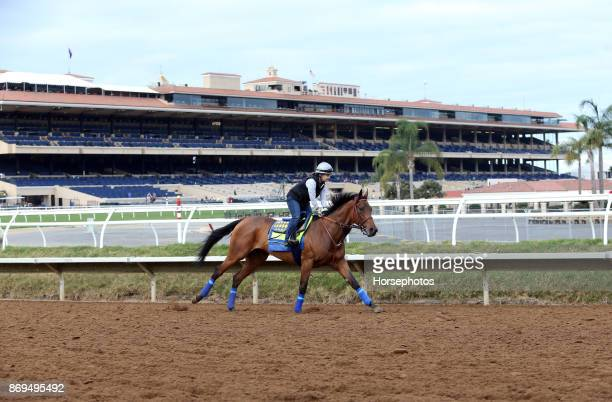 Abel Tasman on track in preparation for the Breeders' Cup at Del Mar Race Track on November 2 2017 in Del Mar California