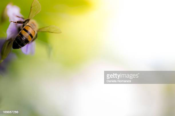 abelha trabalhando - trabalhando stock photos and pictures