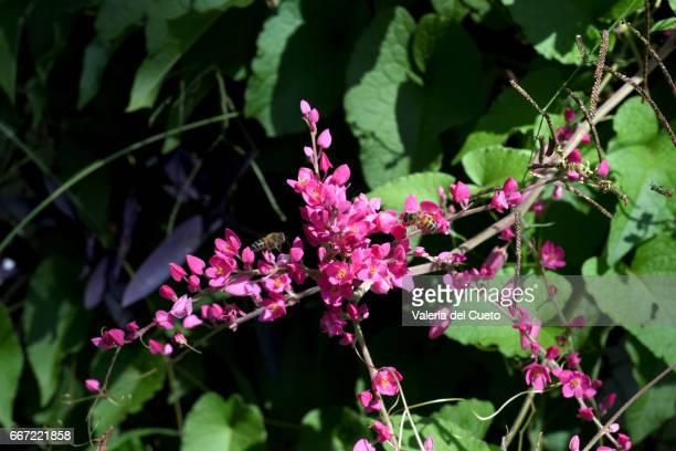 abelhas nas flores - sem fim... valéria del cueto stock pictures, royalty-free photos & images