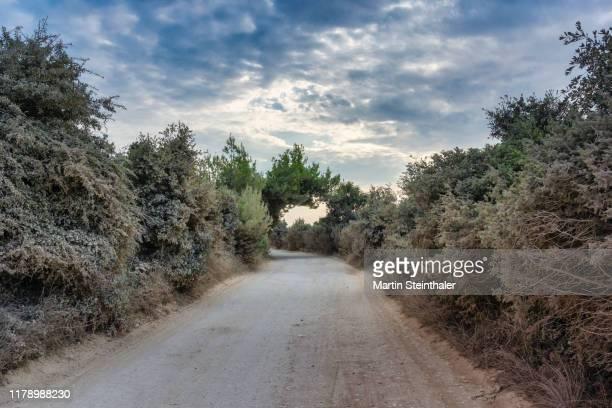 abgelegener und staubiger weg in wilder natur und bedeckter himmel - weg bildbanksfoton och bilder