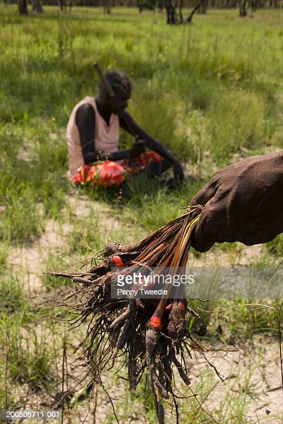 Aboriginal woman digging for orchid root