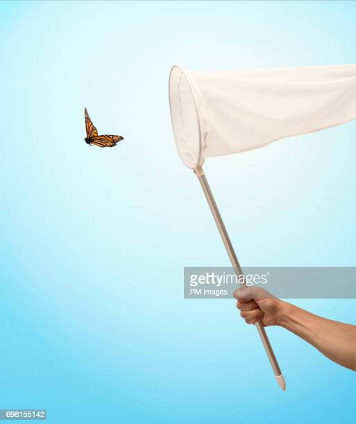 About to catch a butterfly with a net