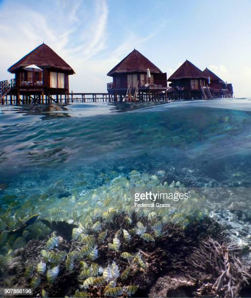 Above And Underwater View Of Maldivian Island