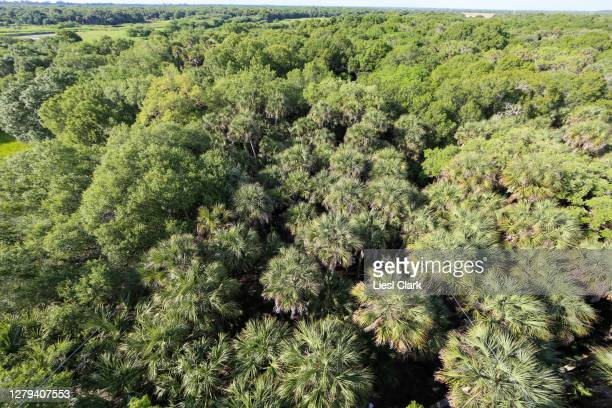 above the treetops at myakka river state park, fl - florida us state stock pictures, royalty-free photos & images