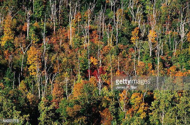 above view of a forest destroyed by acid rain - acid rain stock photos and pictures