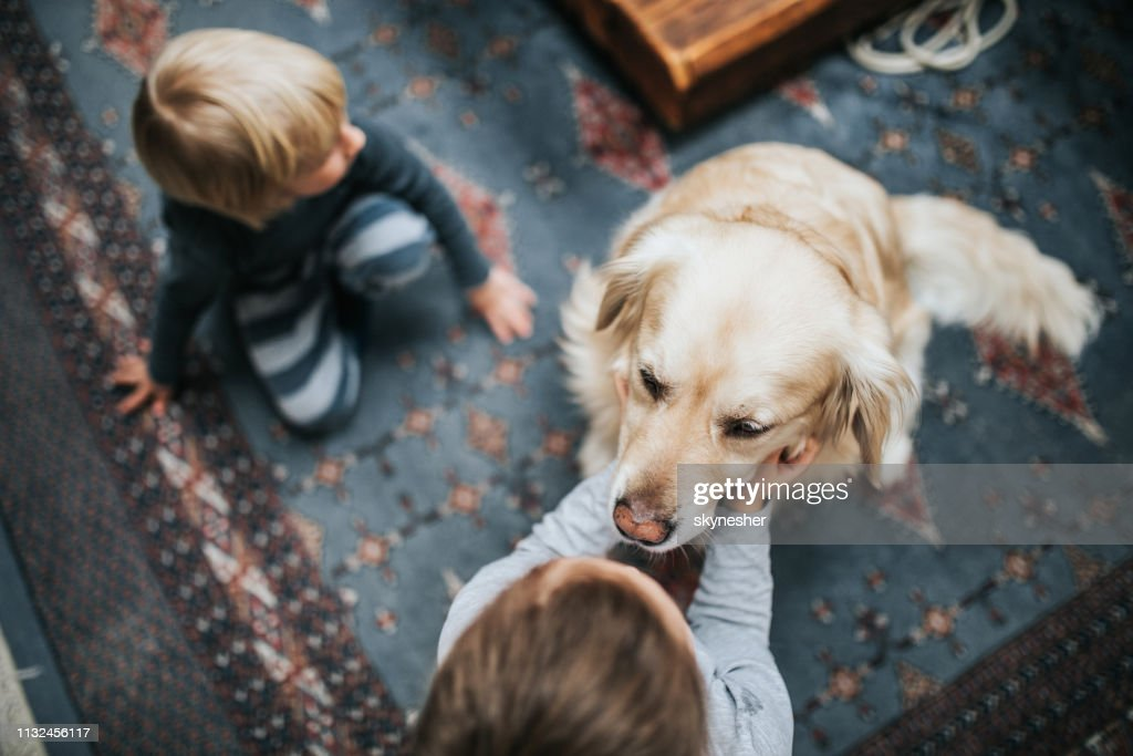 Above view of small kids enjoying with their dog at home. : Stock Photo