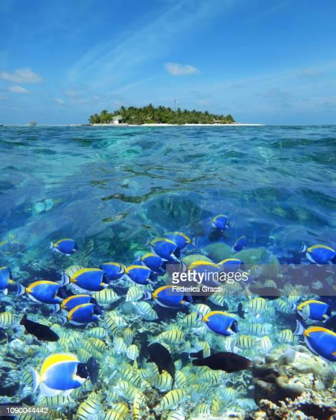 above-underwater view of eriyadu island, maldives - 潟湖 ストックフォトと画像