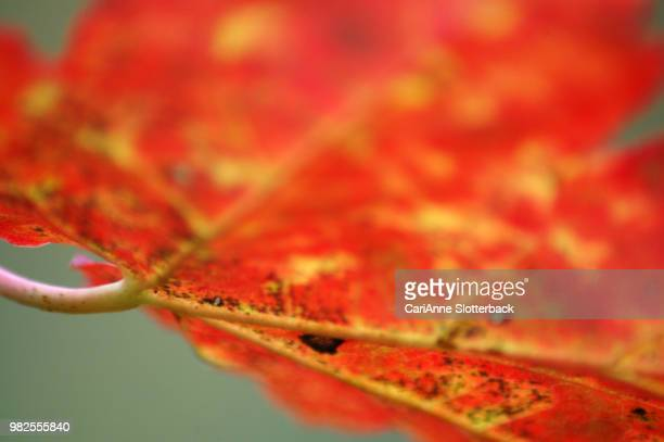 abstract autumn - cari stock pictures, royalty-free photos & images