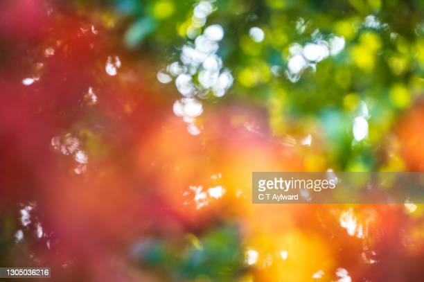 abstract autumnal leaves in daylight - autumn stock pictures, royalty-free photos & images