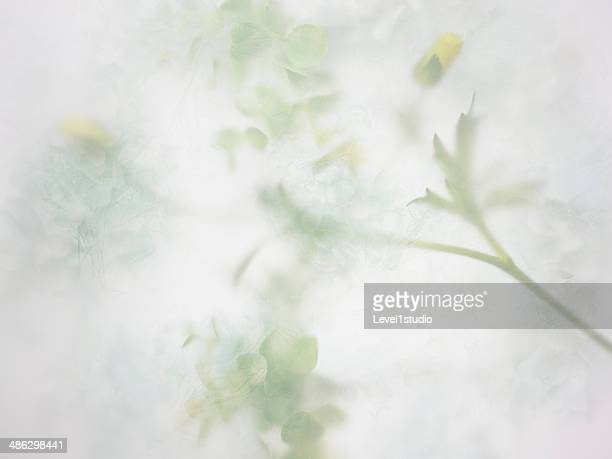 Abstract background of the flower