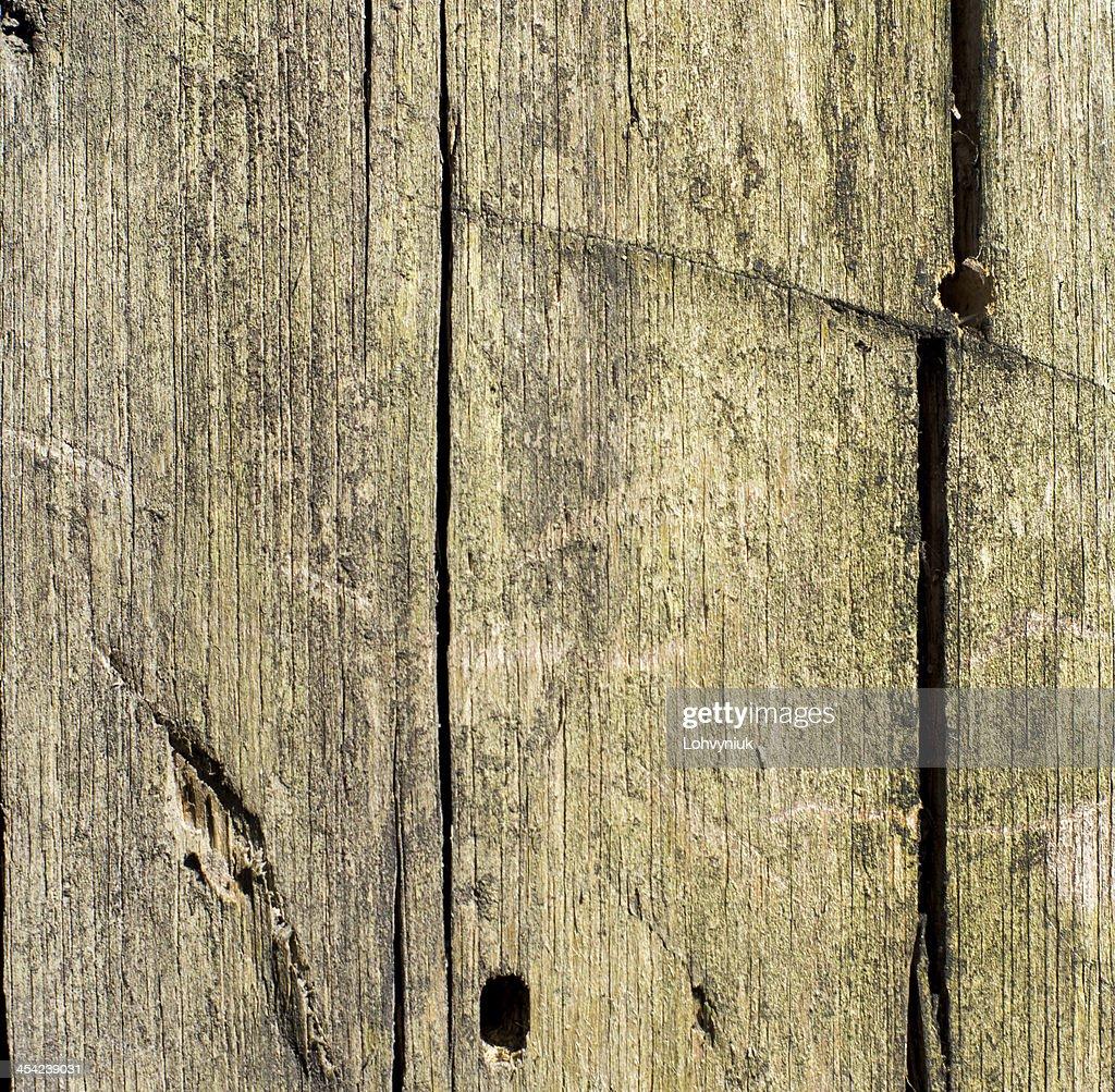 abstract background tree bark texture : Stock Photo
